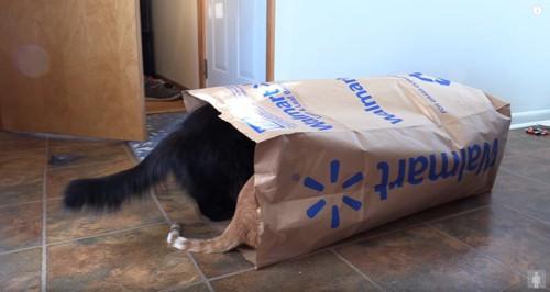 大きな紙袋に入った2匹の猫