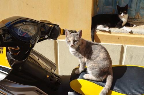 黄色いバイクに乗る猫