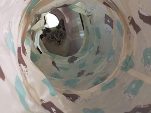 トンネルで移動するシャルル