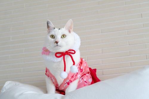 洋服を着てクッションの上に座る猫
