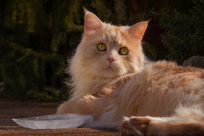 氷と猫の写真