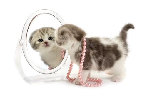 鏡をのぞく子猫