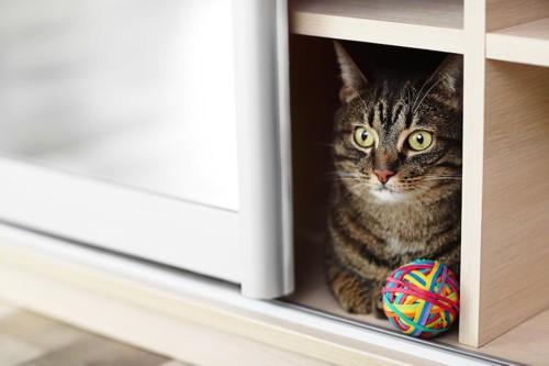 棚の中に入ってくつろぐ猫