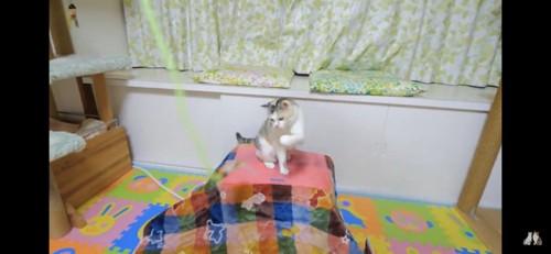 ネコ吉ちゃんの番