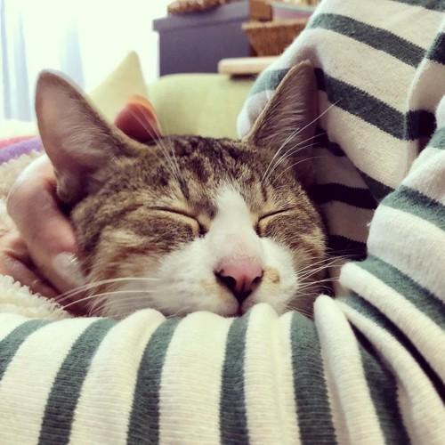 腕の中で眠る猫