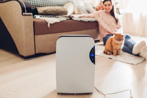 空気清浄機のそばにいる猫と女性