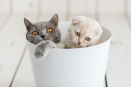 ゴミ箱に入る2匹の猫