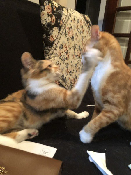 猫パンチされる瞬間