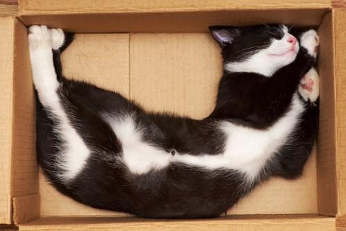 段ボール箱の中で眠っている白黒の猫