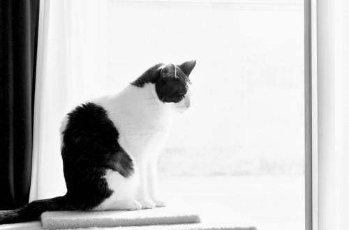 窓際にたたずむ猫