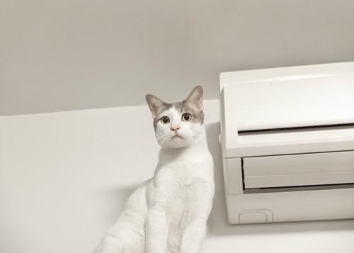 エアコンのそばに座っている白猫
