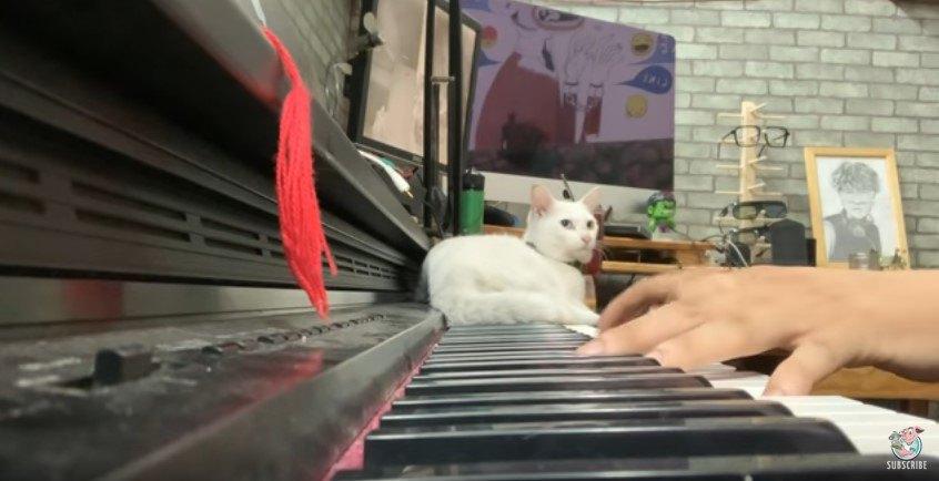 ピアノの高音域の鍵盤上でくつろぐ猫
