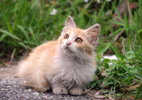 野良の長毛の猫