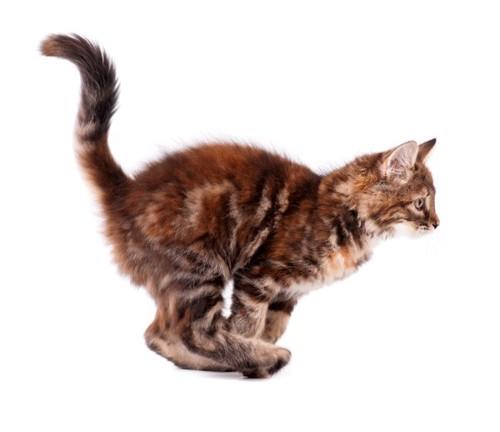 走りだそうとする子猫