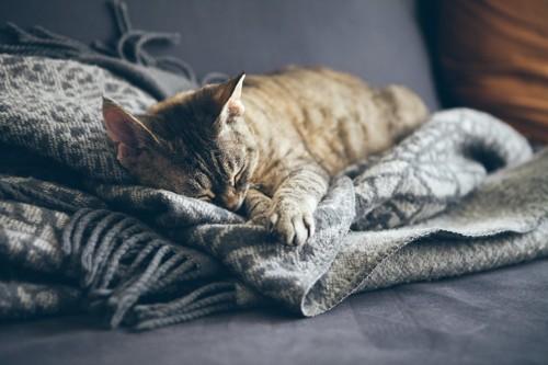ソファーに置かれたブランケットの上で寝る猫
