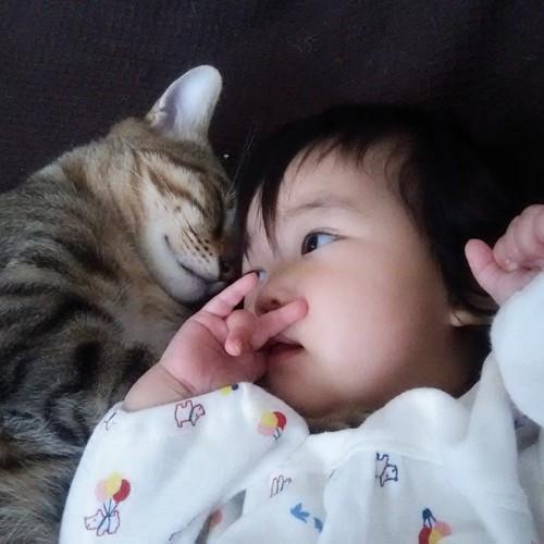 猫と赤ちゃんツーショット