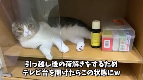 テレビ台の中にいる猫
