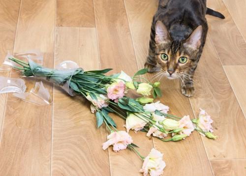 割れた花瓶の前でこちらを見上げる猫