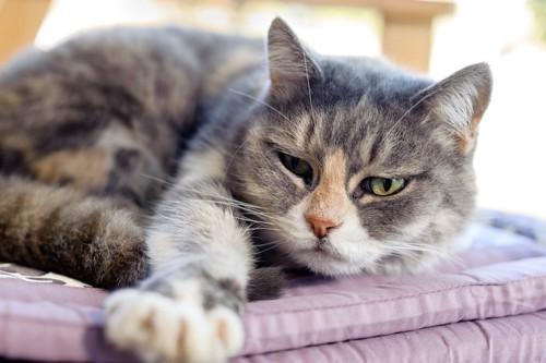 目が覚めて不機嫌そうな猫