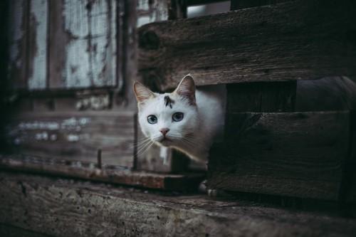 迷子になって物陰に隠れている猫