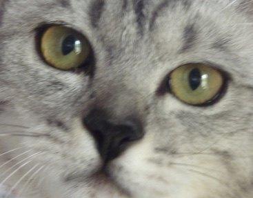 心を開く猫