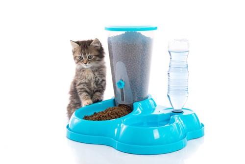 給餌機と猫