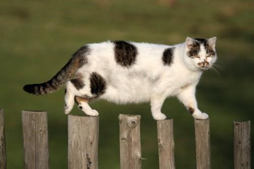 丸太の上を歩く猫