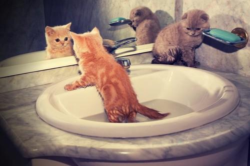 洗面所で遊ぶ子猫たち