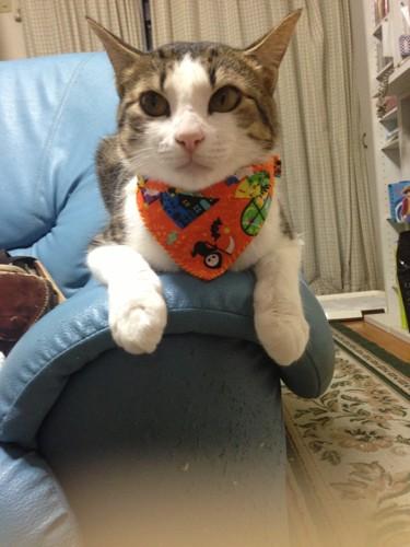 千代、オレンジ色のバンダナ風首輪