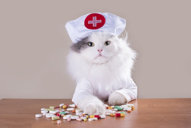 薬を出す猫ナース