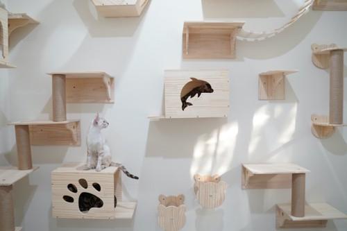 段差の多い壁にいる猫