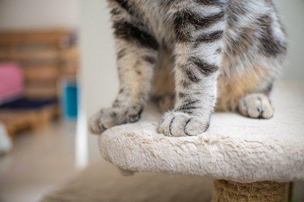 前足の間を空けて座る猫