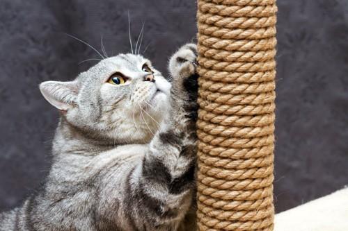 爪とぎポールで爪とぎをする猫