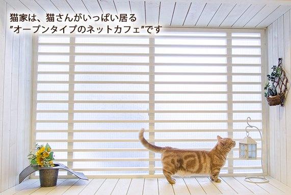 http://www.nekoyacafe.com/kawagoe/index.html/ 猫家店内の様子