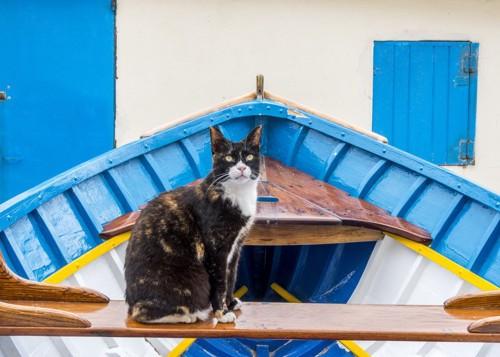 マルタ島の船の上の猫
