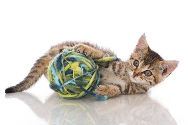 猫と毛玉ボール