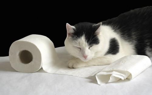 猫とペーパー