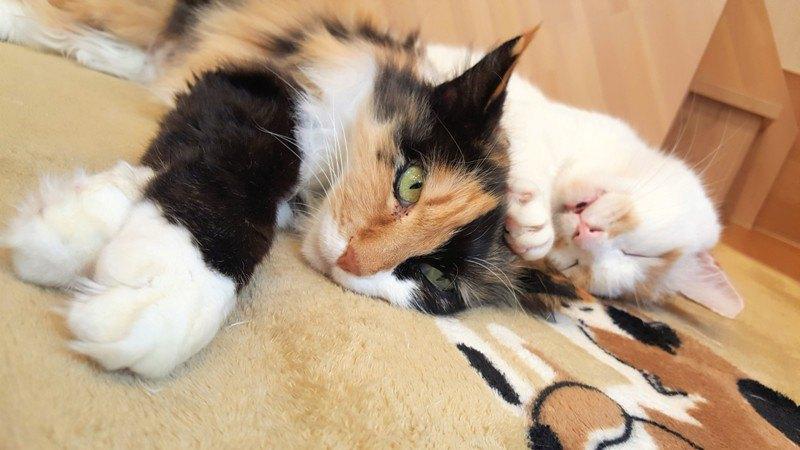 ネコリパブリックの猫たち