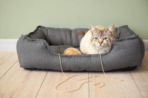 ベッドにいる猫