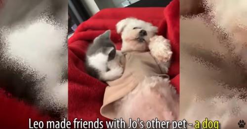 子猫と白い犬
