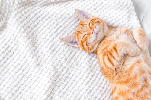 ベッドの上でお腹を上に向けて寝ている猫