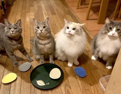家の中で集まる猫たち