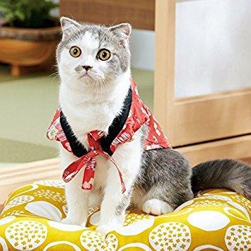 猫のちゃんちゃんこ