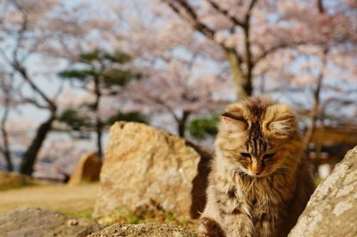 考え中の猫