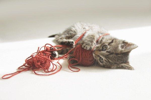 毛糸に奮闘する猫