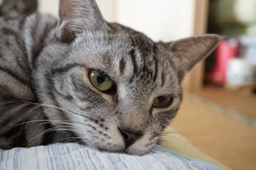 触られることを嫌がる猫