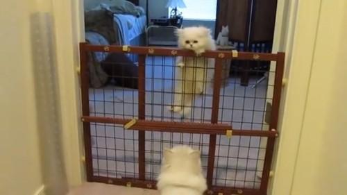 策を登る猫