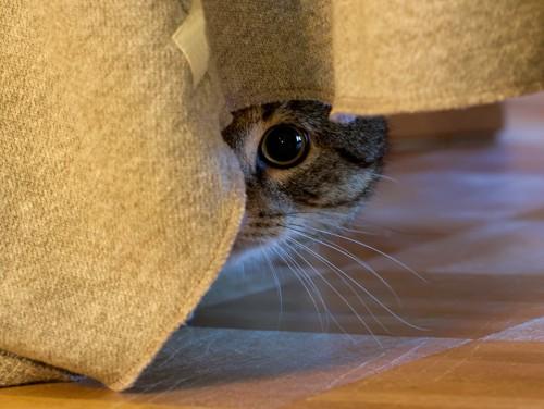 隠れて片目だけ見ている猫