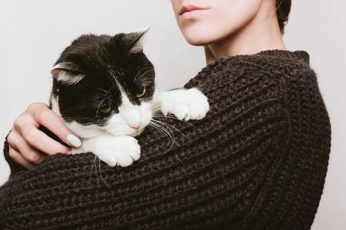 傷んだソファーと猫