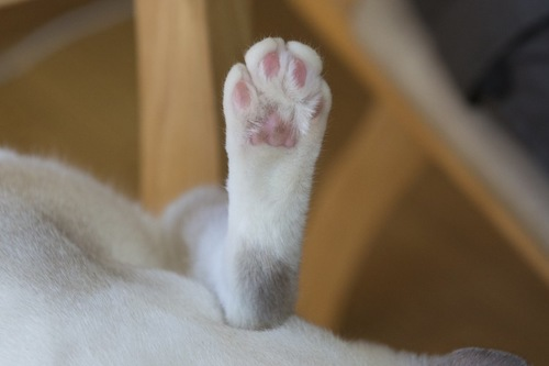 猫の後ろ足アップ
